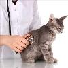 Ветеринарные клиники в Сортавале
